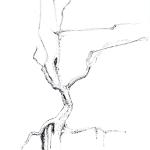 Dry Tree. Ink on paper. ca 40 x 30 cm
